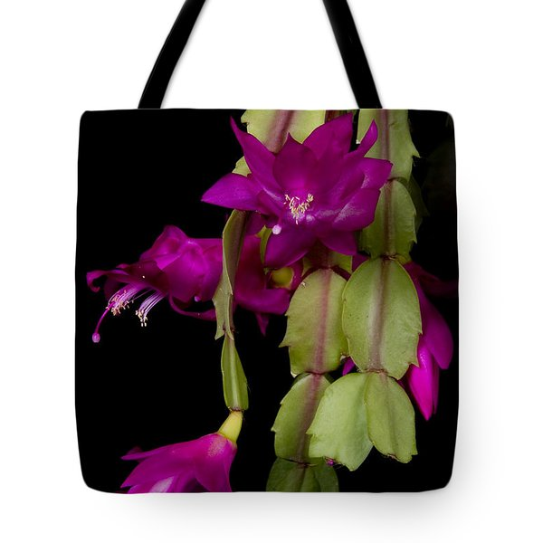 Christmas Cactus Purple Flower blooms Tote Bag by James BO  Insogna