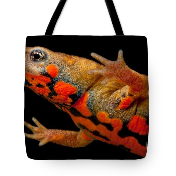 Chuxiong Fire Belly Newt Tote Bag by Dant� Fenolio