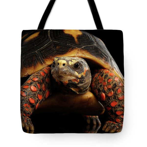 Close-up Of Red-footed Tortoises, Chelonoidis Carbonaria, Isolated Black Background Tote Bag by Sergey Taran