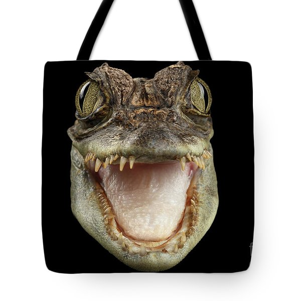 Closeup Head Of Young Cayman Crocodile , Reptile With Opened Mouth Isolated On Black Background, Fro Tote Bag by Sergey Taran