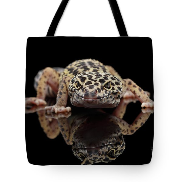 Closeup Leopard Gecko Eublepharis Macularius Isolated On Black Background, Front View Tote Bag by Sergey Taran