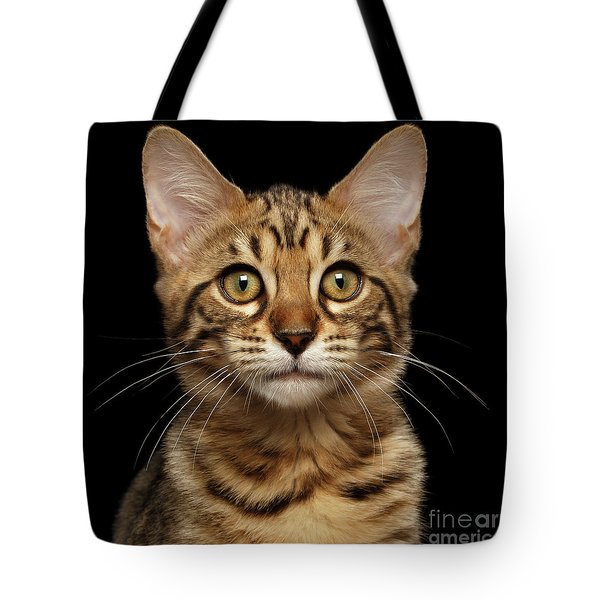 Closeup Portrait Of Bengal Kitty Isolated Black Background Tote Bag by Sergey Taran