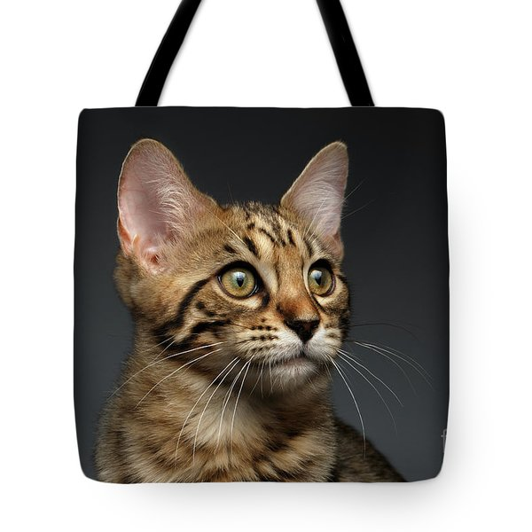 Closeup Portrait Of Bengal Male Kitty On Dark Background Tote Bag by Sergey Taran