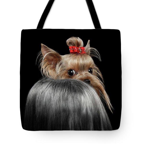 Closeup Yorkshire Terrier Dog, Long Groomed Hair Pity Looking Back Tote Bag by Sergey Taran