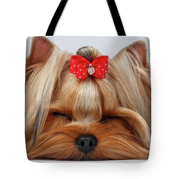 Closeup Yorkshire Terrier Dog With Closed Eyes Lying On White  Tote Bag by Sergey Taran