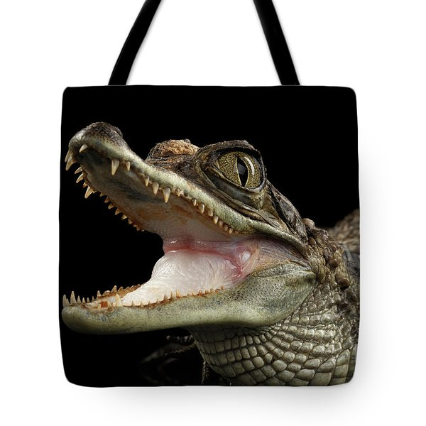 Closeup Young Cayman Crocodile, Reptile With Opened Mouth Isolated On Black Background Tote Bag by Sergey Taran