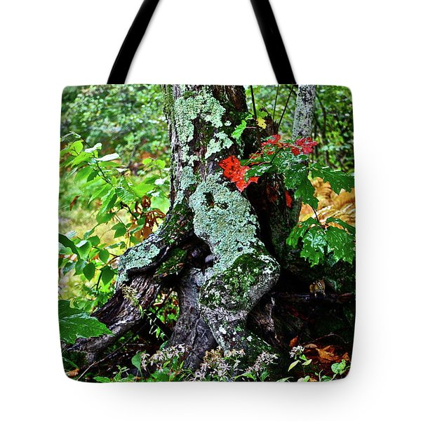Colorful Stump Tote Bag by Diana Hatcher