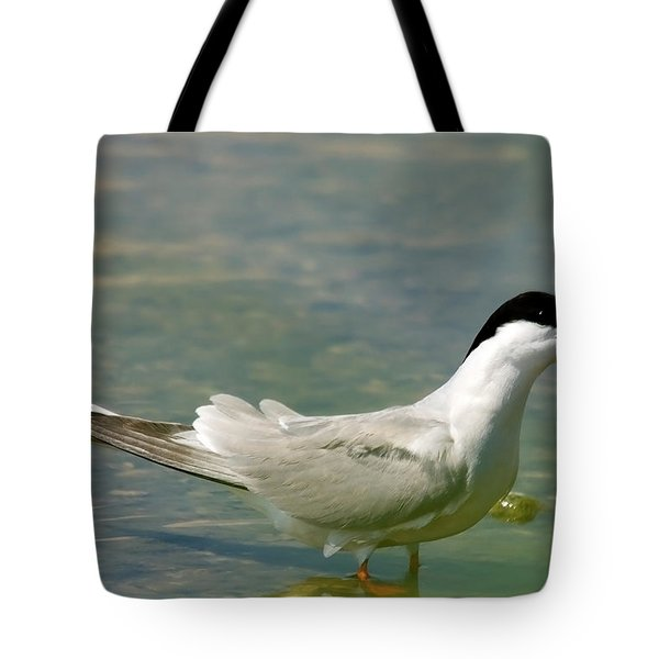 Common Tern Portrait Tote Bag by Cliff  Norton
