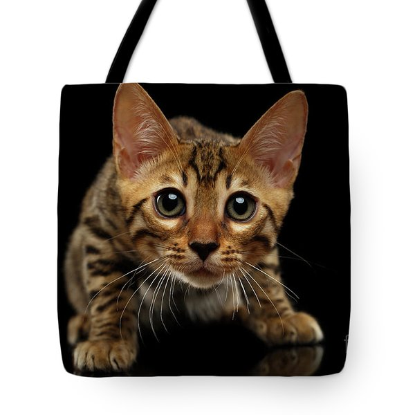Crouching Bengal Kitty On Black  Tote Bag by Sergey Taran
