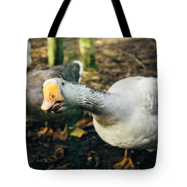 Curious Grey Goose Tote Bag by Pati Photography