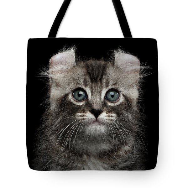 Cute American Curl Kitten With Twisted Ears Isolated Black Background Tote Bag by Sergey Taran