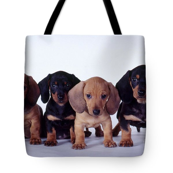 Dachshund Puppies  Tote Bag by Carolyn McKeone and Photo Researchers