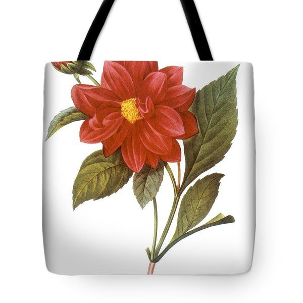 Dahlia (dahlia Pinnata) Tote Bag by Granger