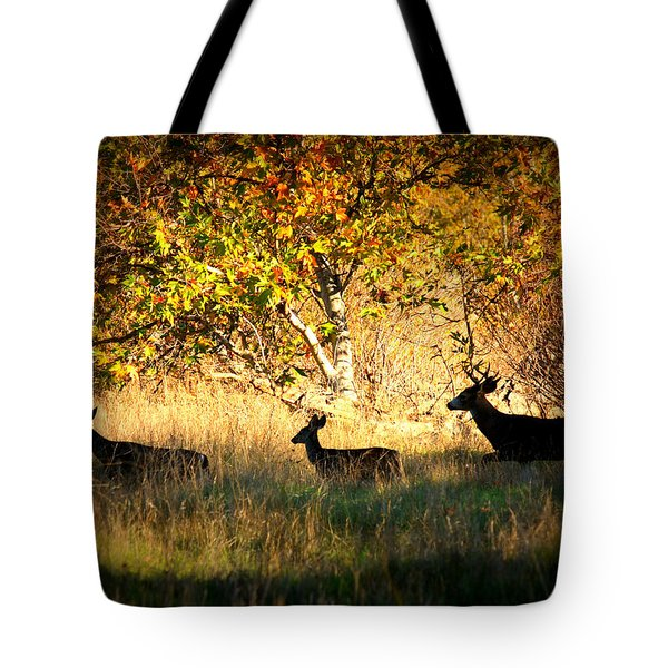 Deer Family in Sycamore Park Tote Bag by Carol Groenen