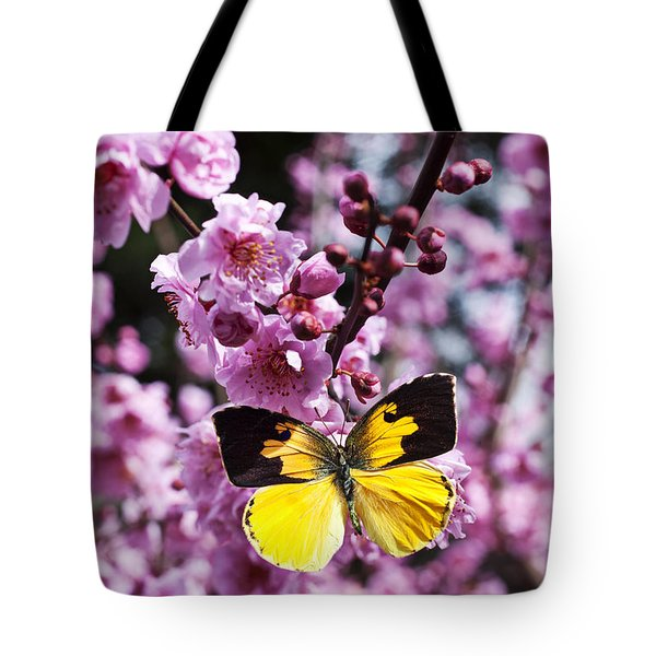 Dogface butterfly in plum tree Tote Bag by Garry Gay
