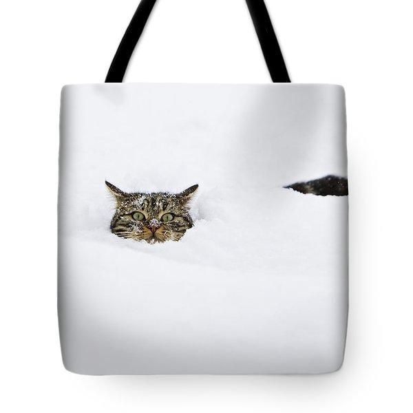 Domestic Cat Felis Catus In Deep Snow Tote Bag by Konrad Wothe