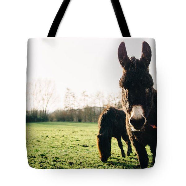Donkey And Pony Tote Bag by Pati Photography