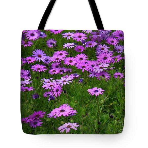 Dreaming Of Purple Daisies  Tote Bag by Carol Groenen