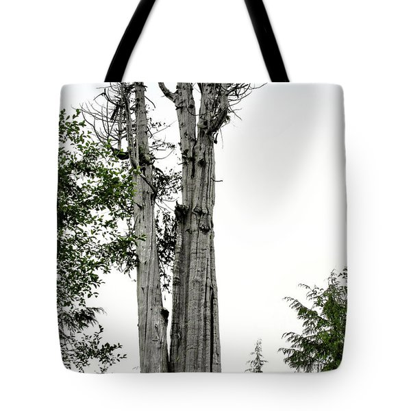 Duncan Memorial Big Cedar Tree - Olympic National Park WA Tote Bag by Christine Till