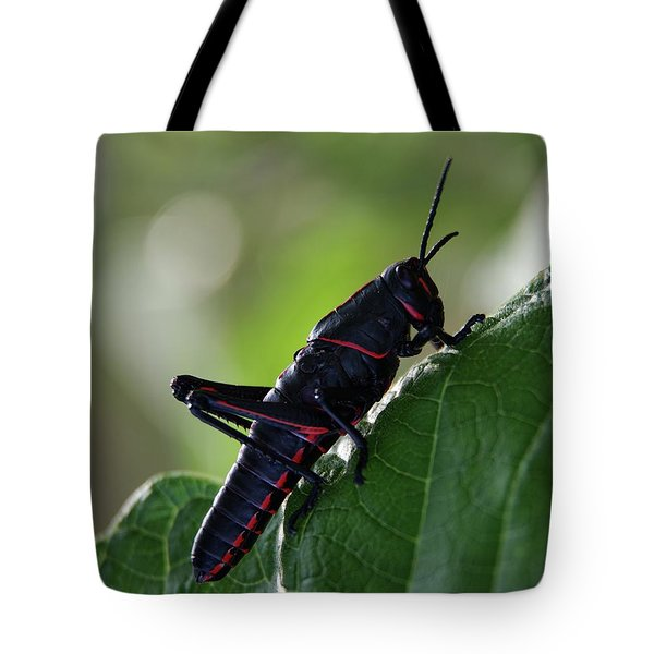 Eastern Lubber Grasshopper Tote Bag by Richard Rizzo