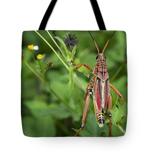 Eastern Lubber Grasshopper  Tote Bag by Saija  Lehtonen