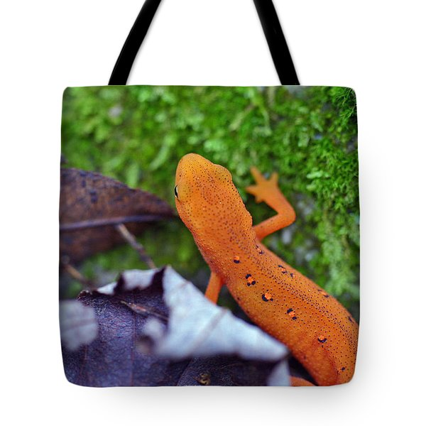 Eastern Newt Tote Bag by David Rucker