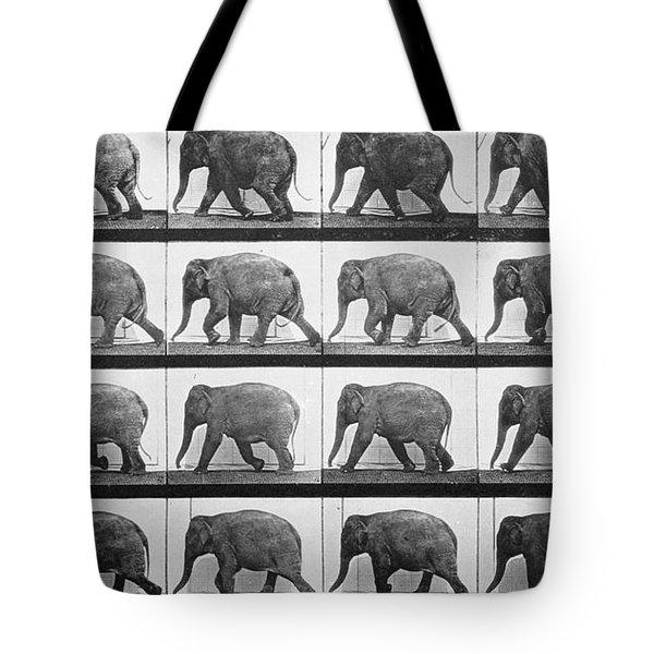 Elephant Walking Tote Bag by Eadweard Muybridge