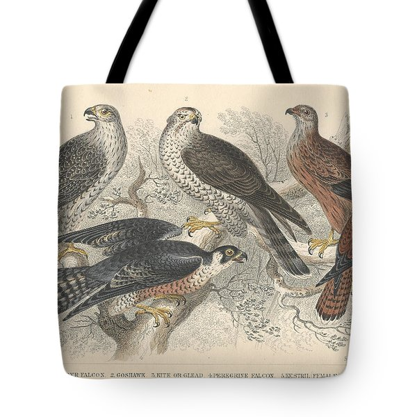 Falcons Tote Bag by Oliver Goldsmith