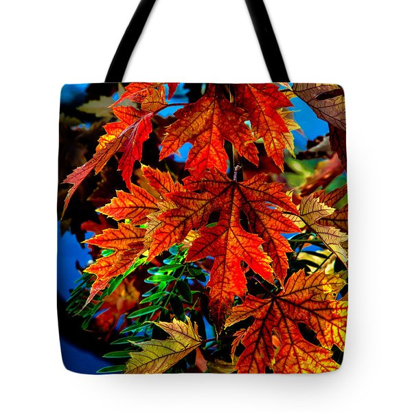 Fall Reds Tote Bag by Robert Bales