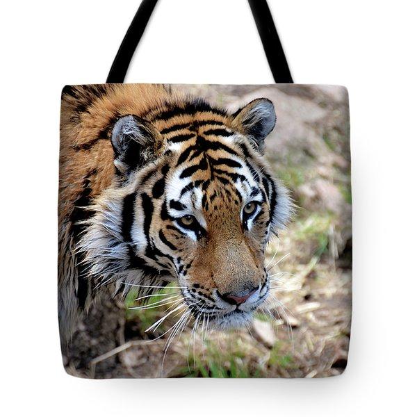 Feline Focus Tote Bag by Angelina Vick