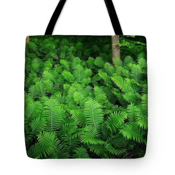 Ferns Tote Bag by Michael Peychich