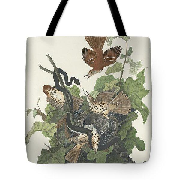 Ferruginous Thrush Tote Bag by John James Audubon