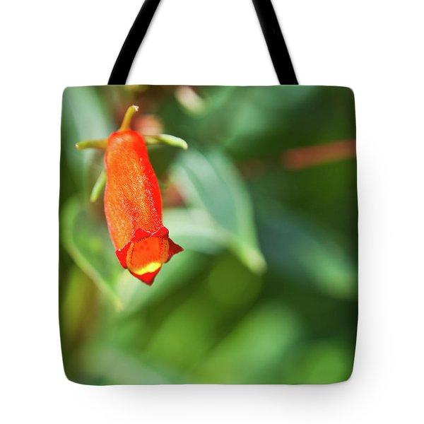 Firecracker Blossom Tote Bag by Douglas Barnett