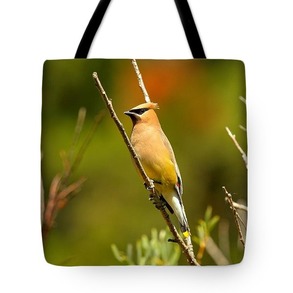 Fishercap Cedar Waxwing Tote Bag by Adam Jewell