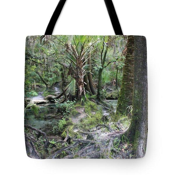 Florida Landscape - Lithia Springs Tote Bag by Carol Groenen