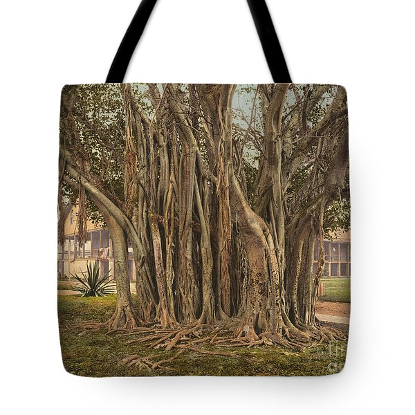 Florida: Rubber Tree, C1900 Tote Bag by Granger