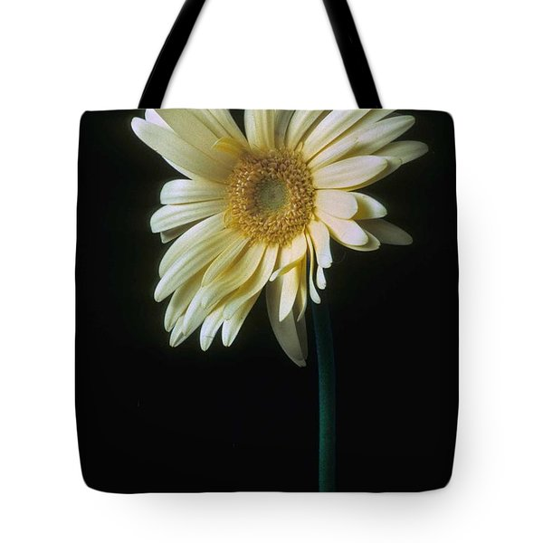 Gerber Daisy Tote Bag by Laurie Paci