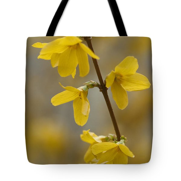 Golden Forsythia Tote Bag by Kathy Clark