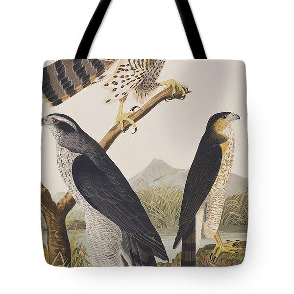 Goshawk And Stanley Hawk Tote Bag by John James Audubon