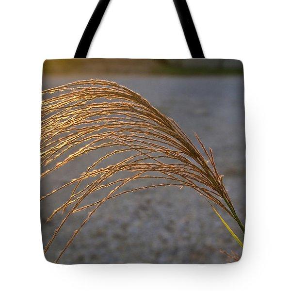 Grassflowers in the Setting Sun Tote Bag by Douglas Barnett