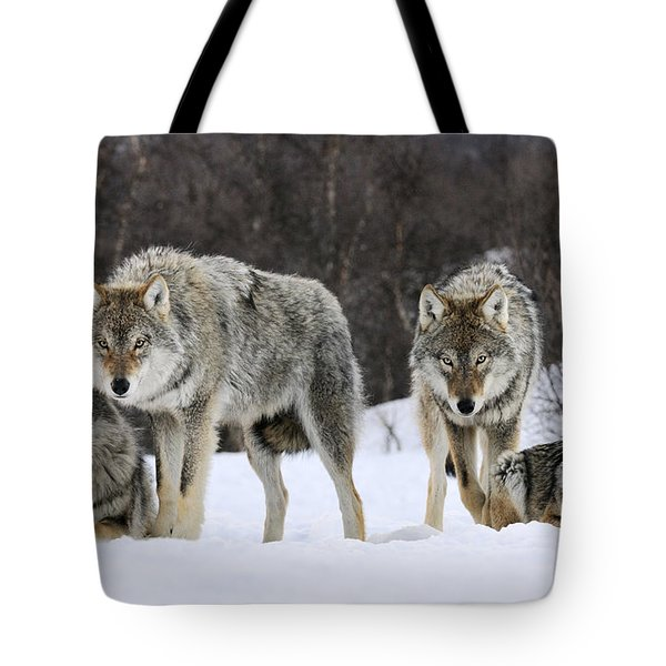 Gray Wolf Canis Lupus Group, Norway Tote Bag by Jasper Doest