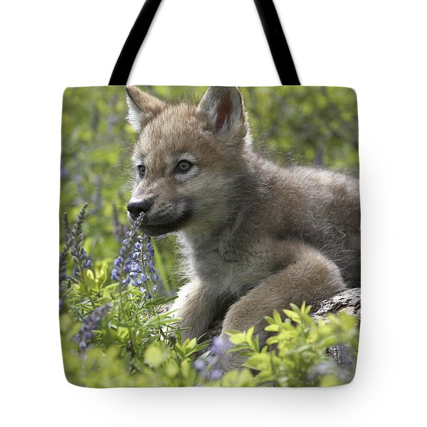 Gray Wolf Canis Lupus Pup Amid Lupine Tote Bag by Tim Fitzharris