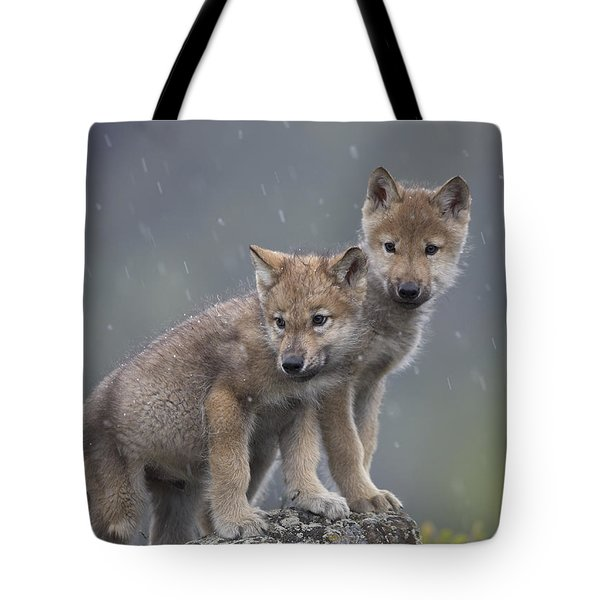 Gray Wolf Canis Lupus Pups In Light Tote Bag by Tim Fitzharris