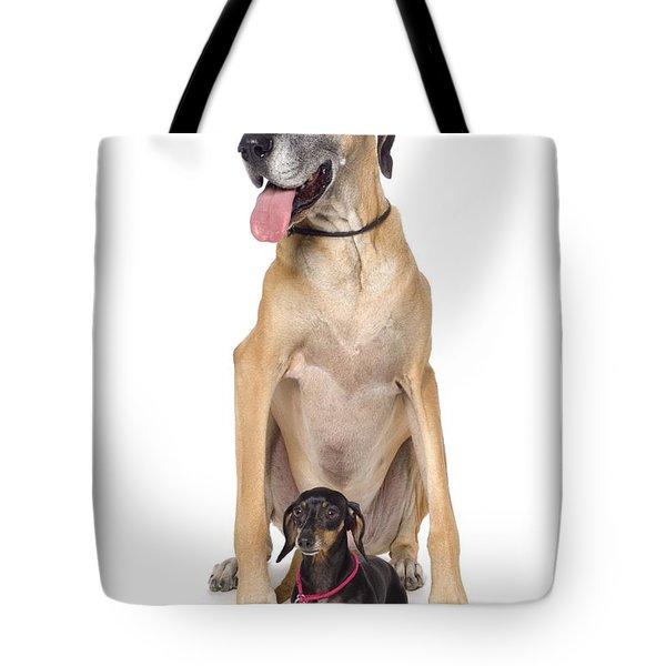 Great Dane And Dachshund Portrait Tote Bag by Corey Hochachka