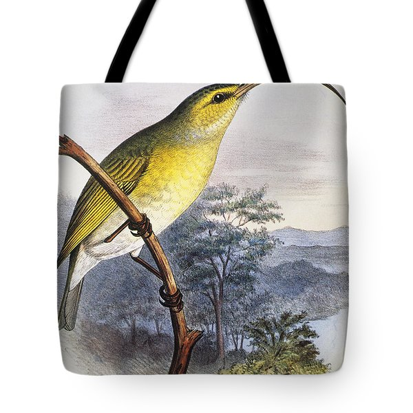 Greater Akialoa Tote Bag by Hawaiian Legacy Archive - Printscapes