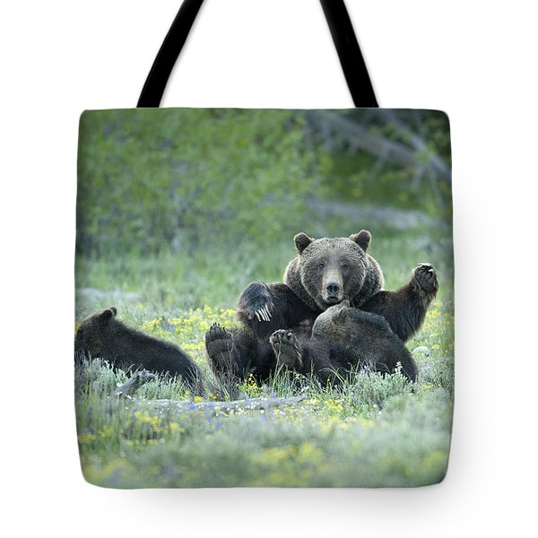 Grizzly Romp - Grand Teton Tote Bag by Sandra Bronstein