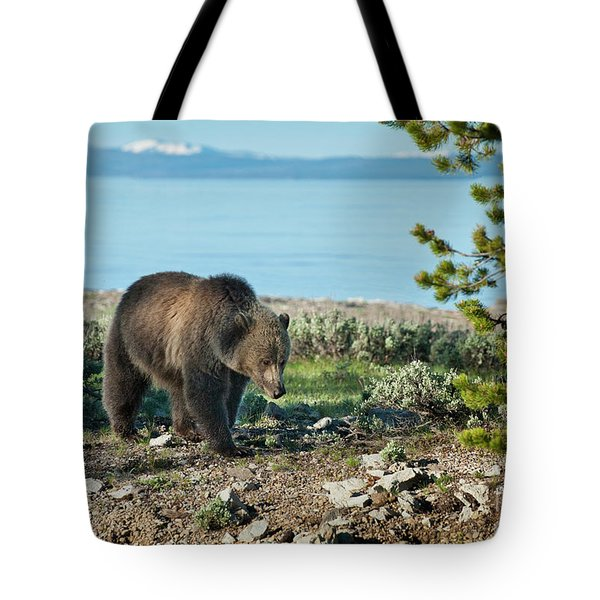 Grizzly Sow at Yellowstone Lake Tote Bag by Sandra Bronstein