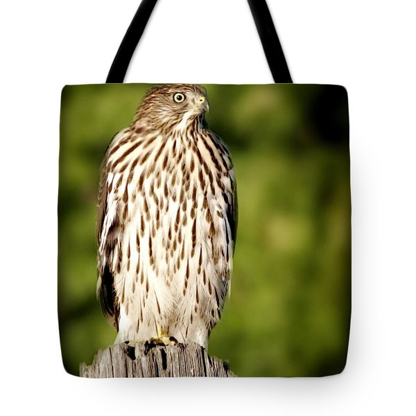 Hawk Waiting For Prey Tote Bag by Christine Till