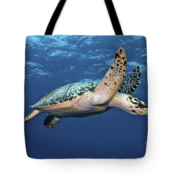 Hawksbill Sea Turtle In Mid-water Tote Bag by Karen Doody