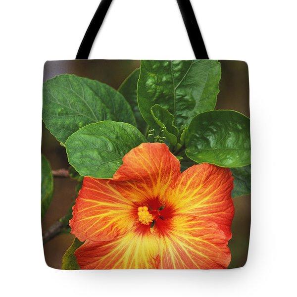 Hibiscus Tote Bag by Allan Seiden - Printscapes